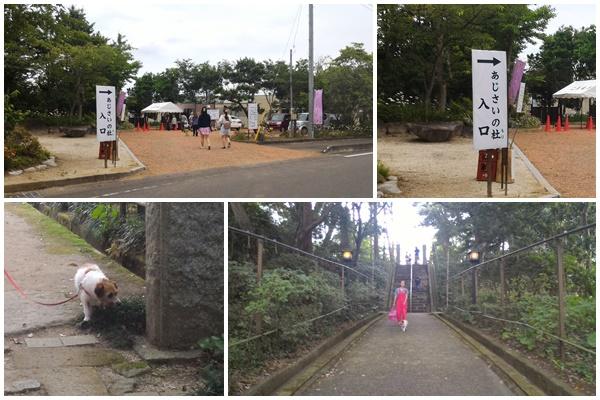 二本松寺あじさい祭-1